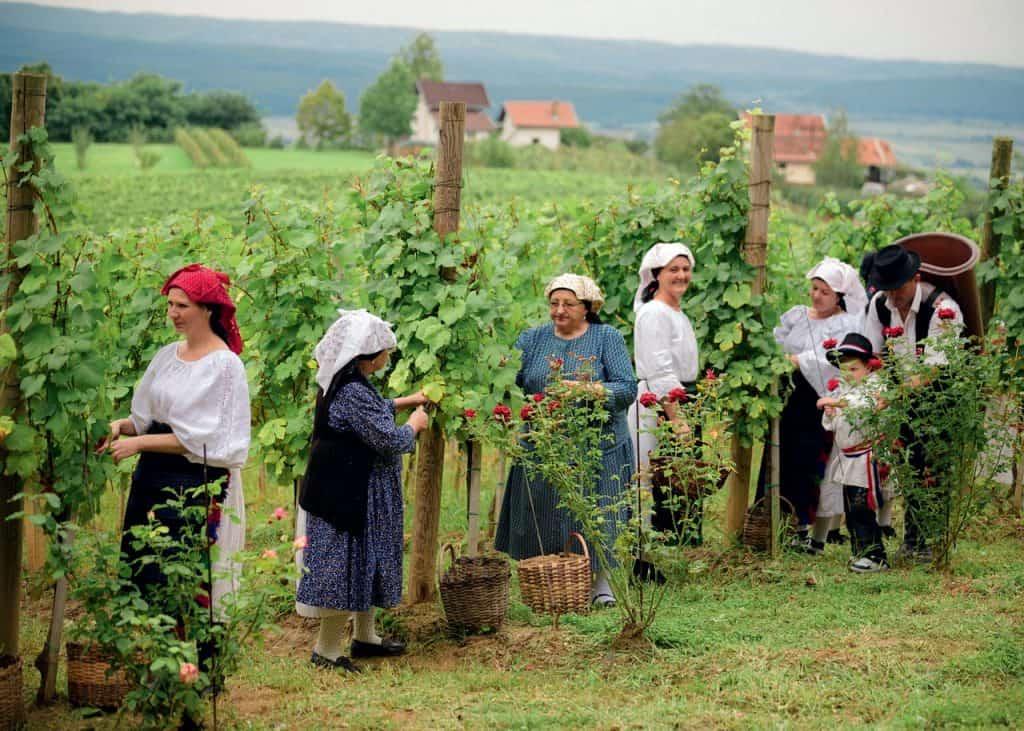 Slavonija Pleternica