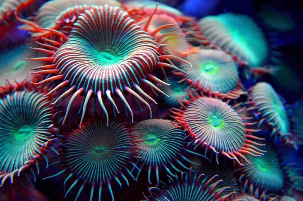 Svjetski Dan Oceana Podvodna Slika 01