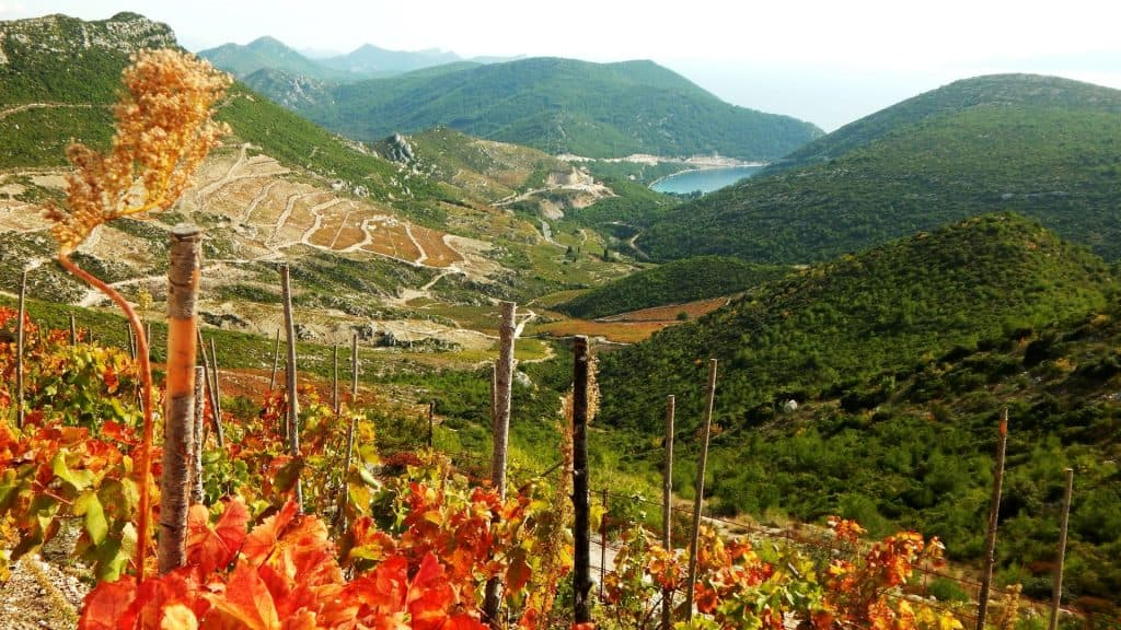 Grapeyards Peljesac 01