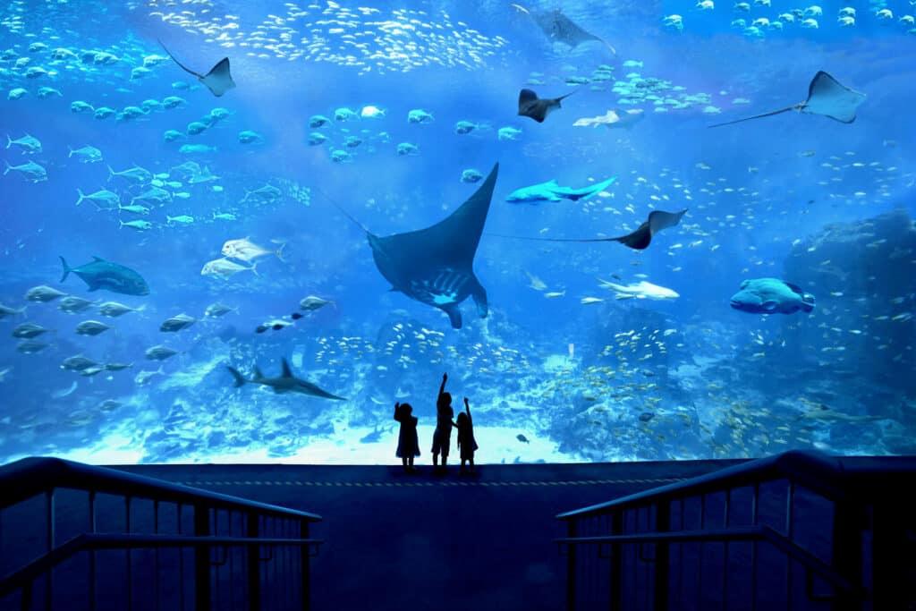 Ovo je fotografija morskog svijeta iz Resorta World Sentosa podvodni hoteli