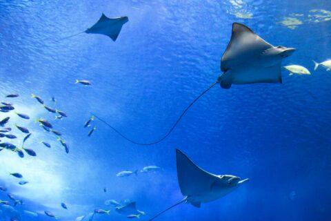 Ovo je fotografija dokumentarni filmovi o moru