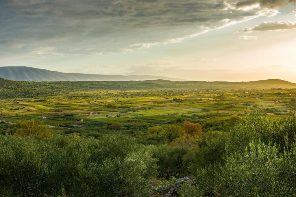 Ovo je fotografija starogradsko polje