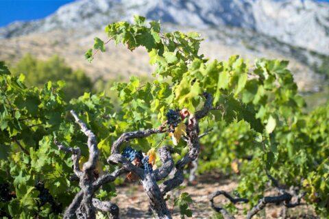 Ovo je fotografija hvar otok vina