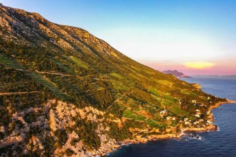 Ovo je fotografija vinograda na poluotoku Pelješac